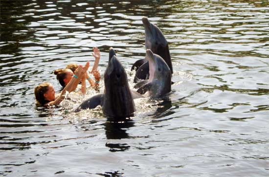swim-with-dolphins
